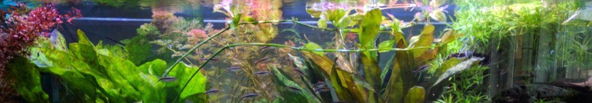 Elofs akvarium